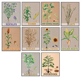 Nebraska Foundation for Agricultural Awareness