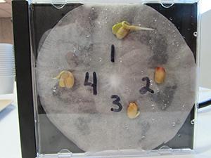 Soybean CD case
